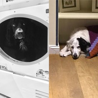 7 good dogs who really did not enjoy the fireworks on Bonfire Night