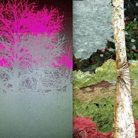 Books: Artwork from Co Down's Kilbroney Park trees forms touring exhibition