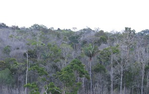 Amazon rainforest failing to keep up with climate change, scientists claim