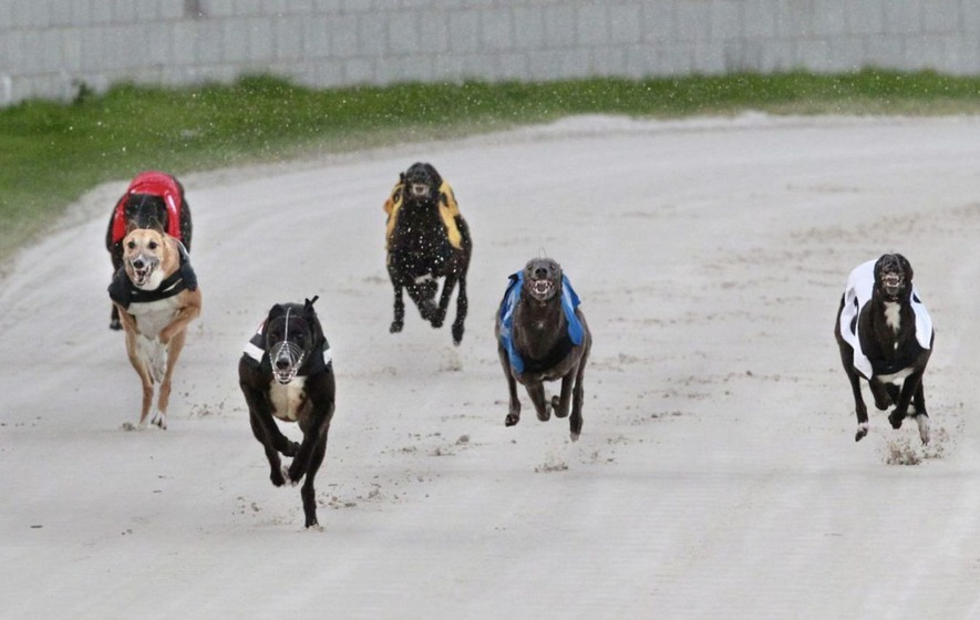 Greyhounds going for Gold Cup treasure at Drumbo