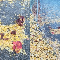 Japanese leaf art makes a thing of beauty from the autumn weather
