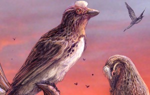 Bird from the age of dinosaurs deepens extinction mystery