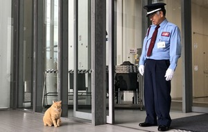 A Japanese art museum is under siege from a pair of neighbourhood cats