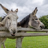 Don't be in the donkey derby in the savings race