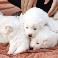 A dog given to South Korea by Kim Jong-un has given birth to 'peace puppies'