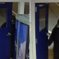 Watch: Bear pulls open door on unexpected visit to police station