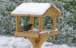 Gardening: Six ways to help wildlife during the winter months