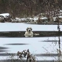 Watch: Brave dog trapped in frozen pond is rescued by firefighters
