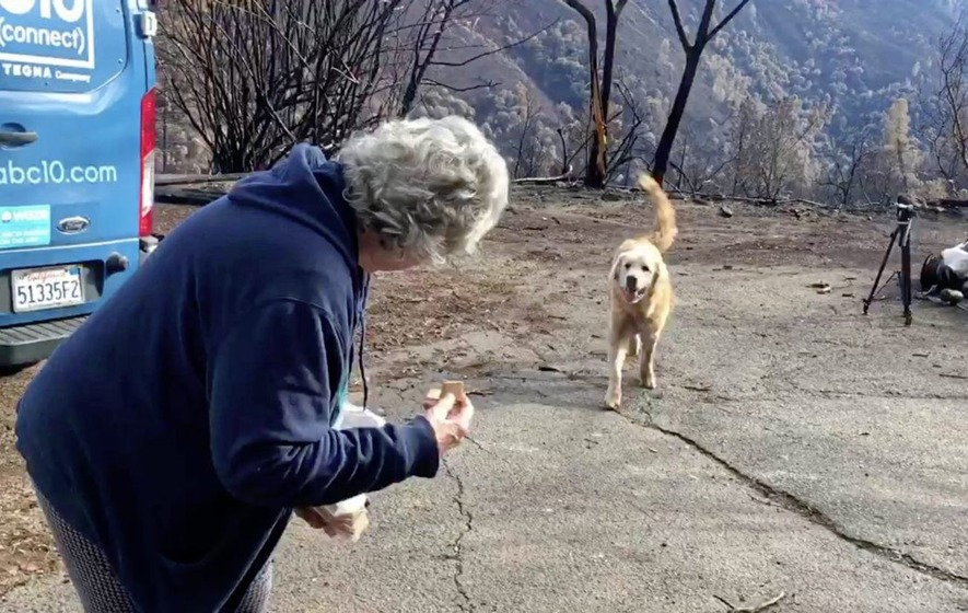 Dog survives California wildfire, guarded burnt home until owner returned