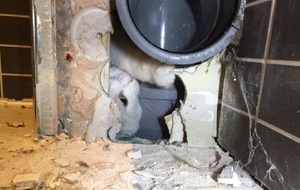 This kitty had to be rescued by firefighters after getting stuck behind a toilet