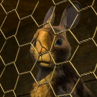 Stars of Watership Down reveal how the original animation terrified them as children