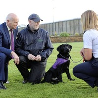 Magilligan to use 'dog therapy' to help inmates with mental health and addiction problems