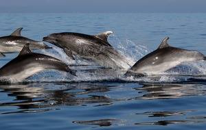 Dolphins form 'long-lasting friendships' but shun other groups – study