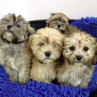 Ferries searched as part of crackdown on the illegal puppy trade