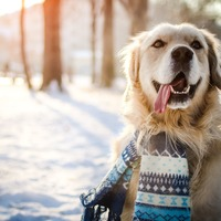 Literally just 12 adorable animals playing in the snow this winter