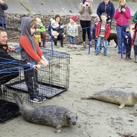 Tears shed as seal pups released back into the wild