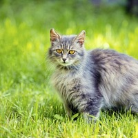 I'm sick of cats ruining my garden at home - so what can I do to stop the problem?