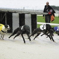 Blow to greyhound racing as Drumbo Park track shuts after 10 years