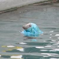 Seal caught in plastic sparks social media debate