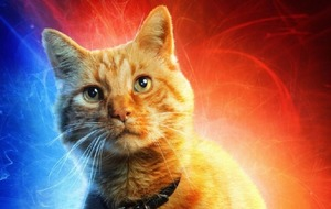 Everyone is falling in love with Captain Marvel's cat Goose