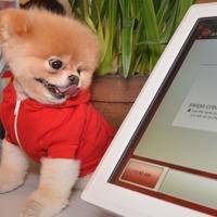 'World's cutest dog' Boo the Pomeranian dies aged 12 from 'broken heart'