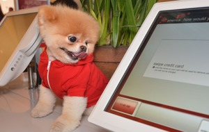 'World's cutest dog' Boo the Pomeranian dies aged 12 from 'broken heart'