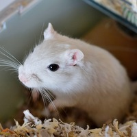 Armed police called to save 'hungry' gerbil