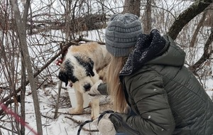 This St Bernard survived 17 days alone in the freezing cold after escaping