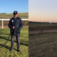 Watch: Whippet sprints off and chases after horse in new Fenton-style viral hit