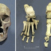 Vikings brought leprosy to Ireland, Belfast university research suggests