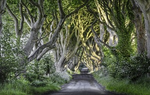Fallen tree from Dark Hedges to be auctioned off to highest bidder