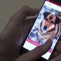 Tinder-style app matches dogs in shelters to potential owners