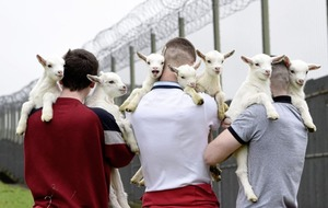 Video: Students at Hydebank young offenders' centre help deliver seven baby goats