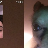 Man left talking to dog on FaceTime after girlfriend falls asleep