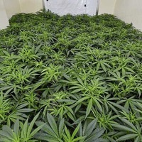 Police raid £80,000 cannabis factory in Dromore