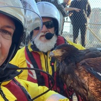 RNLI crew completes 'unusual' rescue of hawk from River Thames