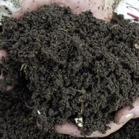 Garden tips: How to choose the right compost