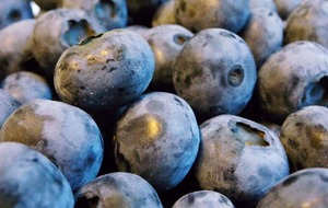 Blueberries help to lower blood pressure, scientists claim