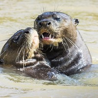 Zoos are handing out their own watery Oscars in the Aquademy Awards