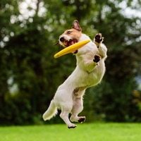Watch as dog runs 83 yards to catch frisbee during half-time show