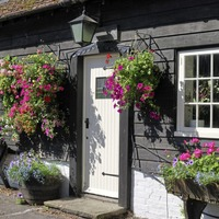 Gardening advice: Tips on how you can jazz up your front door with pot plants