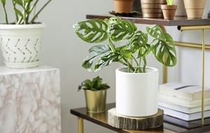Gardening advice: Tips for ensuring your houseplants survive if you want an easy life