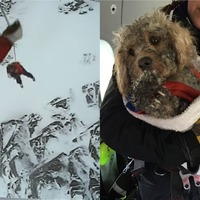 Storm Gareth: Dog missing for 48 hours rescued from snowy mountain ledge