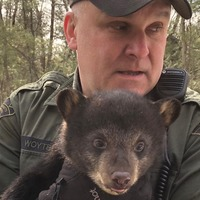 US police move bears which had set up home in the middle of a road