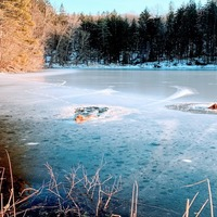 Man and golden retriever jump into frozen reservoir to save trapped dogs