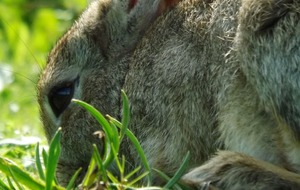 Bunnies attracted to plants bursting with genetic goodness