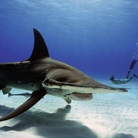 Sharkwater Extinction a fitting legacy for late film-maker Rob Stewart