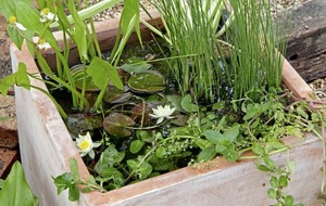 Gardening: How to build a mini-pond and make big difference to small creatures
