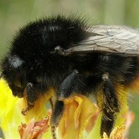 Populations of many UK pollinating insects in decline, study shows
