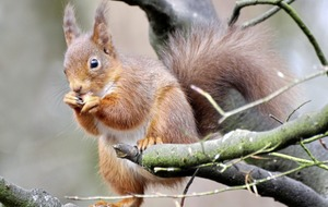 Take on Nature: Ireland's red squirrels are making a comeback
